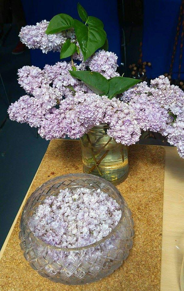 Šeřík - jedlé kvítí, léčivá apomocná bylinka. Jak si zní vyrobit sirup? Abachovu esenci?